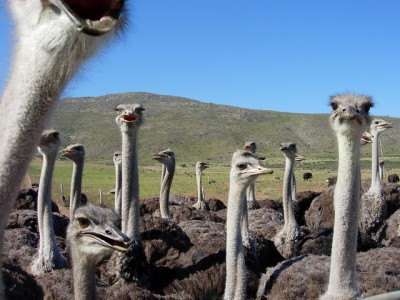 Ostrich-Spending-The-Goff-Financial-Group